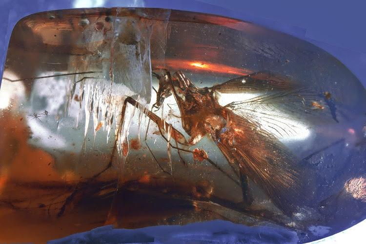 Encuentran atrapado en ámbar un antepasado prehistórico de la mantis religiosa