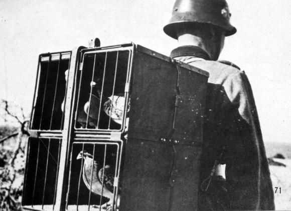 Palomas mensajeras nazis