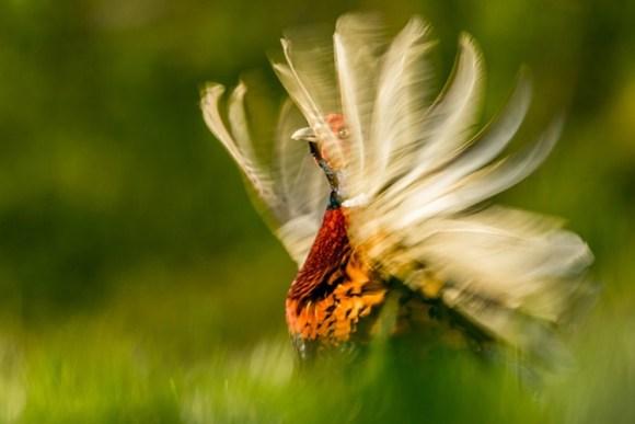 Fotos ganadoras British Wildlife Photographer Year 1