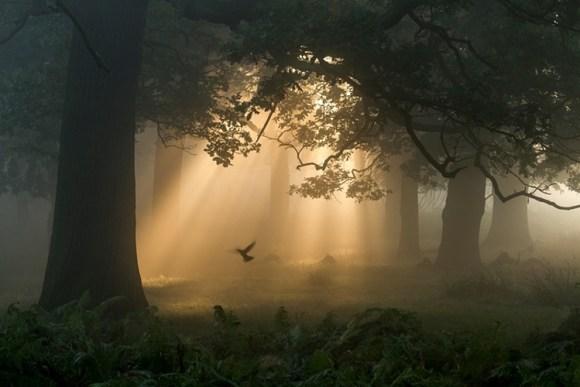 Fotos ganadoras British Wildlife Photographer Year 5