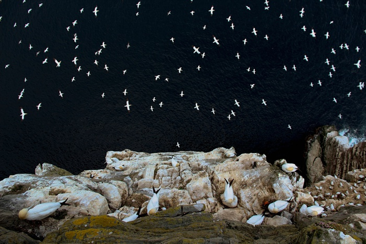 Fotos ganadoras British Wildlife Photographer Year