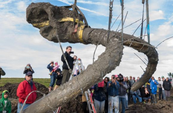 Granjero EEUU encuentra esqueleto casi completo mamut