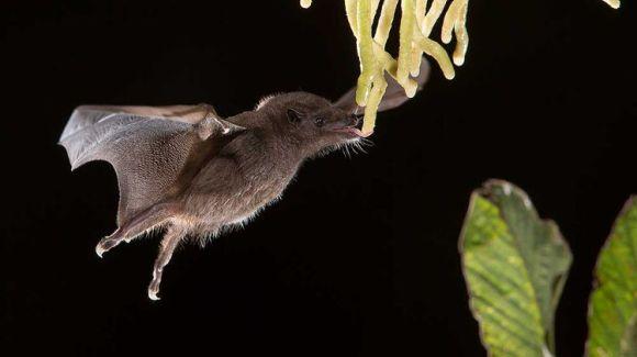 Mejores fotos premio fotografia animal Sociedad Zoologica Londres 1