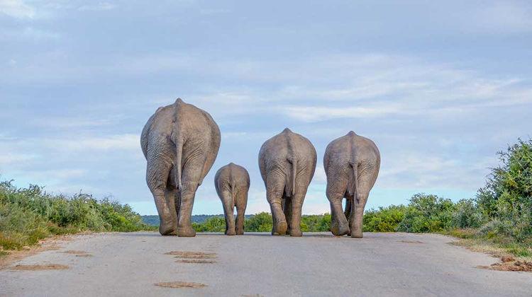 Mejores fotos premio fotografia animal Sociedad Zoologica Londres 2