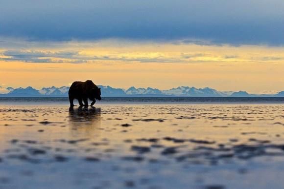 Mejores fotos premio fotografia animal Sociedad Zoologica Londres