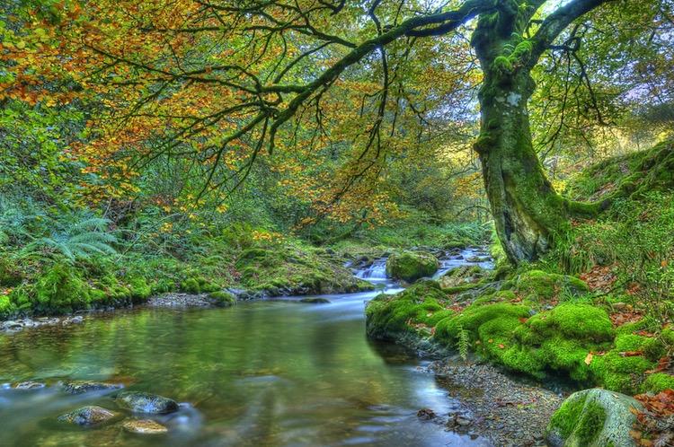 Bosque de Muniellos / Shutterstock