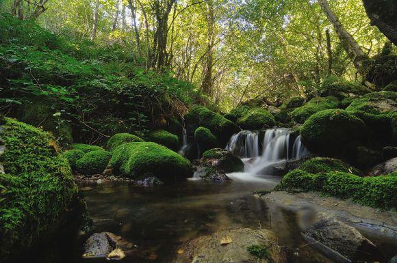 Cinco extraordinarios bosques norte España 3