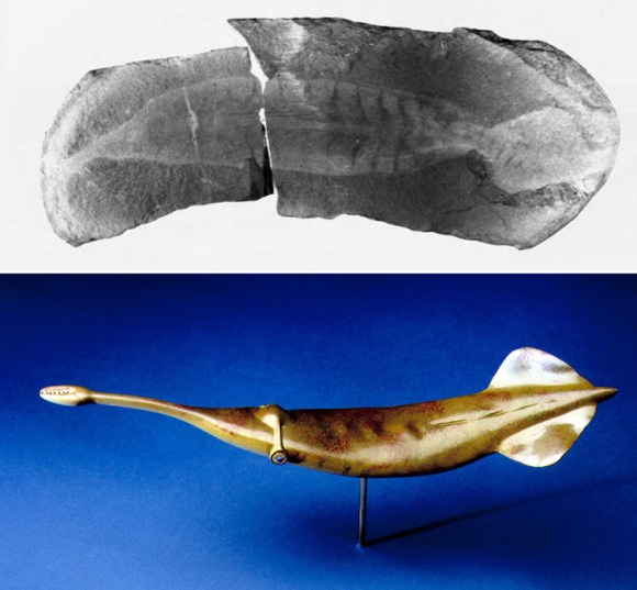 Tullymonstrum fosil paso invertebrado vertebrado 1