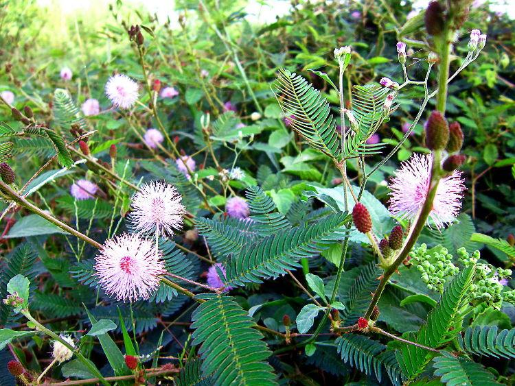 10 plantas comportamiento asombroso 1