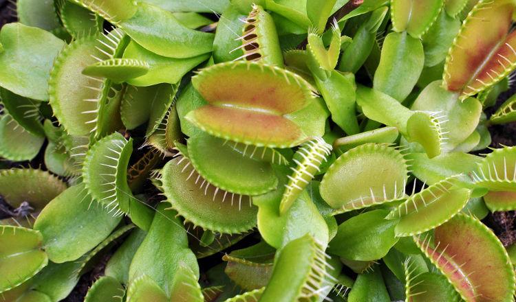 10 plantas comportamiento asombroso 9