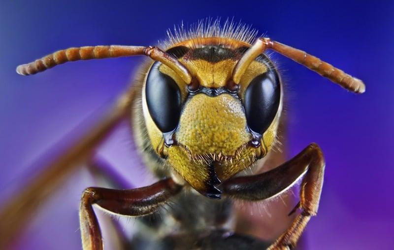 Un nuevo estudio afirma que los insectos poseen consciencia