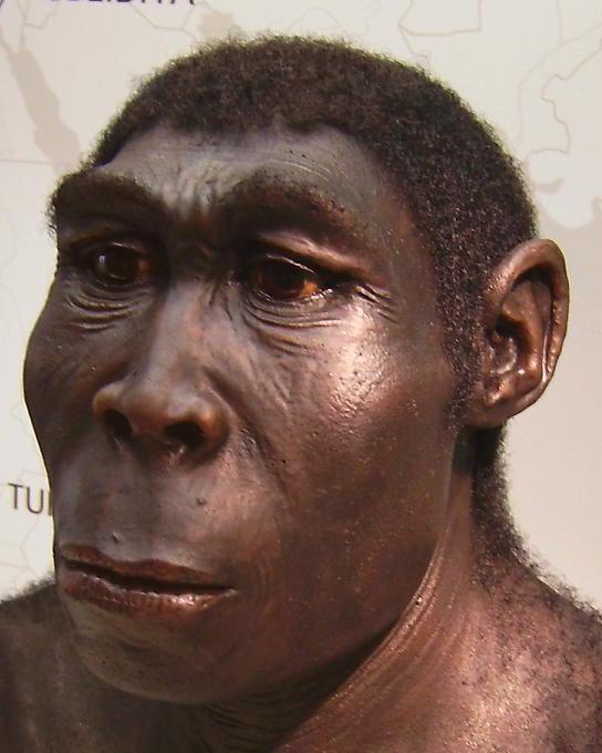 Reconstrucción plástica de un Homo Erectus