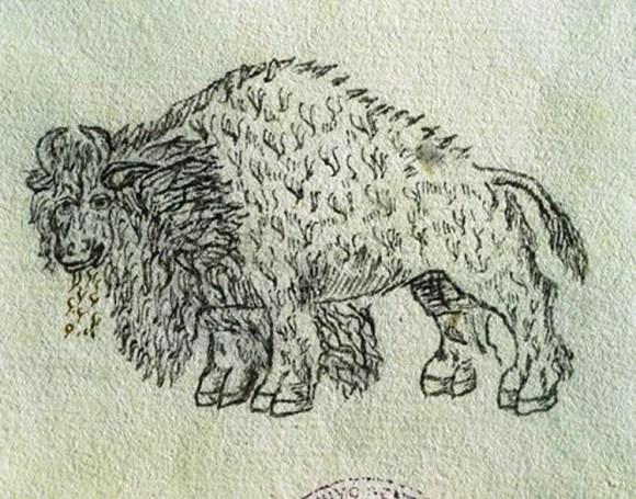 Probablemente el primer dibujo de un bisonte, hecho por Vicente de Zaldívar en 1598