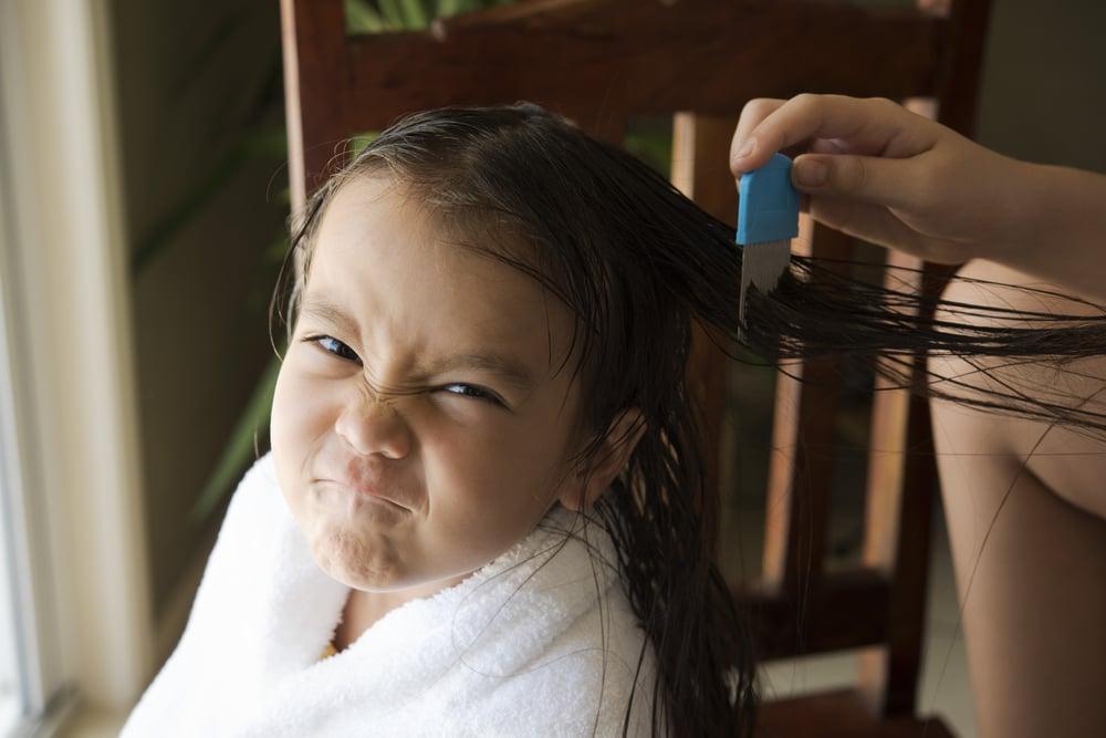 Los piojos, aparte de ser una molestia, nos inmunizan contra algunas infecciones
