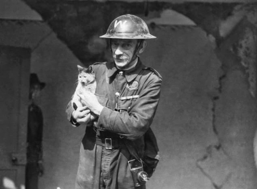 La gran masacre de mascotas en Reino Unido ante el estallido de la Segunda Guerra Mundial
