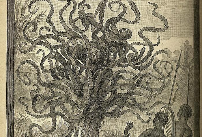 La leyenda del árbol antropófago de Madagascar y otros ejemplos de criptobotánica