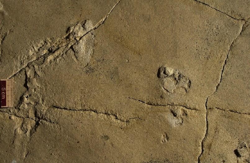 %name Científicos completamente desconcertados Encuentran huellas humanas de 5,7 millones de años en Creta