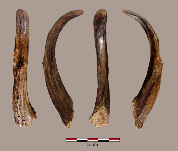 Las herramientas de madera más antiguas usadas por Neandertales, encontradas en un yacimiento del País Vasco