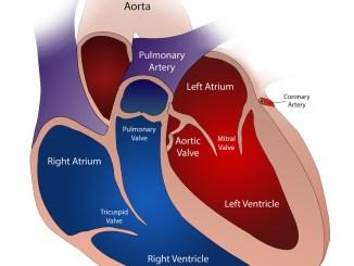 Valvole-cardiache-copertina