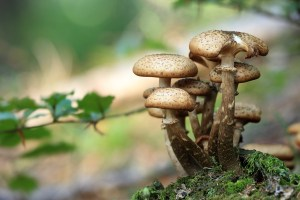 I falsi miti sui funghi