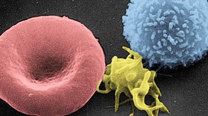 Piastrina-al-microscopio-copertina