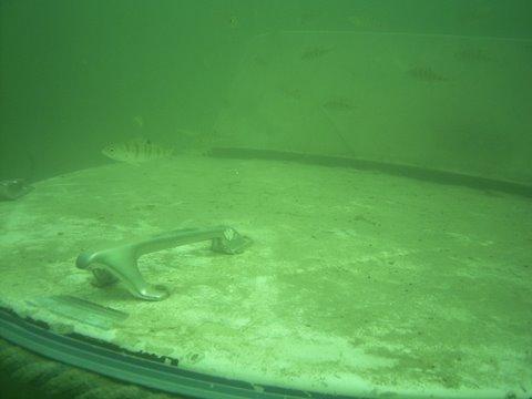 Epaves du lac du Bourget Marinette Charpignat