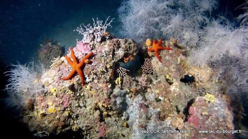 Snorkeling Avec Les Raies Manta à Hawaii Une Expérience