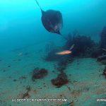 Mola Mola sur le Messerschmitt 109