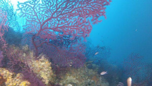 Plongée à Marseille Caramassaigne