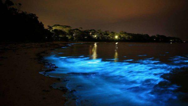 Luminous Lagoon Jamaique, Baie Bioluminescente