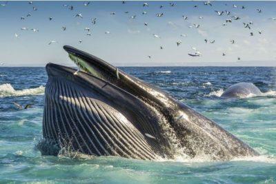 Vie sous-marine avec les baleines