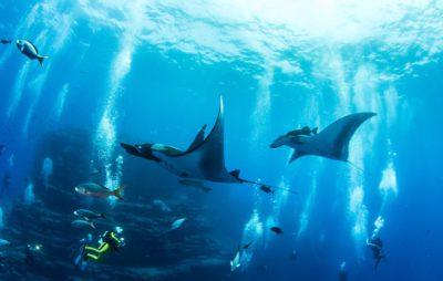 Plonger avec les raies Manta aux Maldives