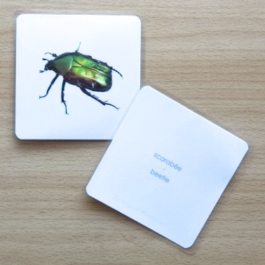imagier insectes