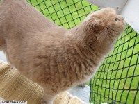 MY CAT'S CATIO: ENCLOSED BALCONY, OUTDOOR PRIVATE PATIO ...