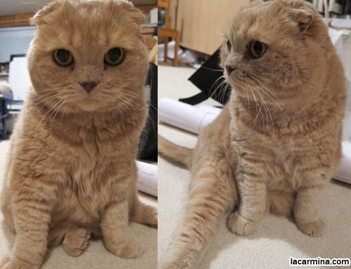 cutest cat breeds ever