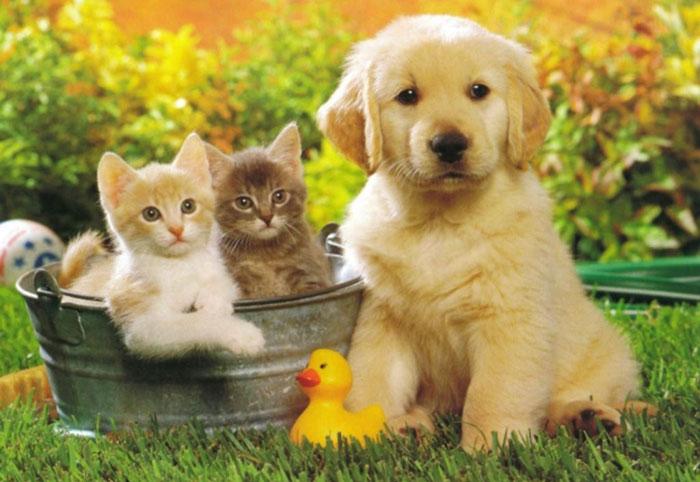 Alojamiento acepta mascotas y perros