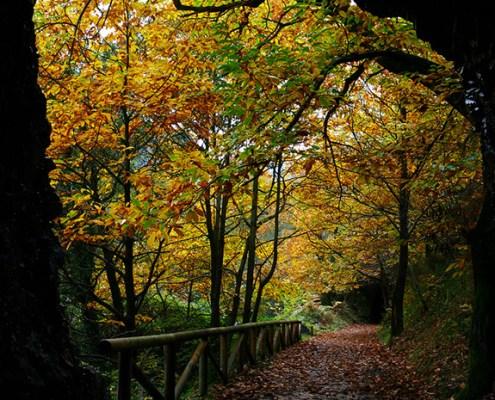 Senda del Oso alrededores casa rural La Carrozal Asturias Teverga