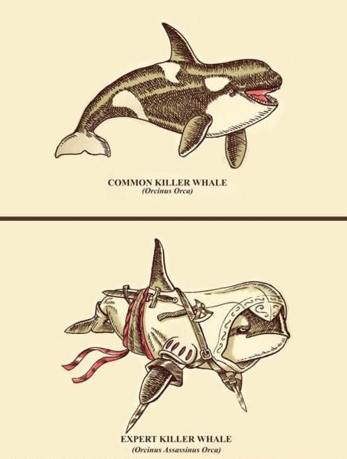 orca-asesina-assassin-creed