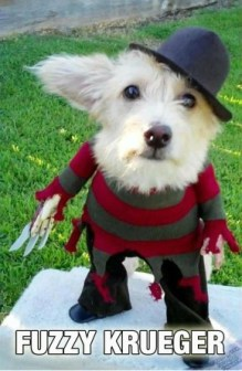 awesomehalloweendogcostume-81946_0-290x445 - copia