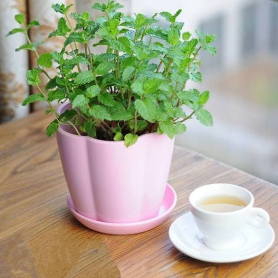 5 plants to decorate your kitchen that you should not miss 04