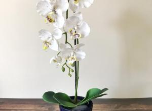 8 decorative vases that are ideal for your orchids 02