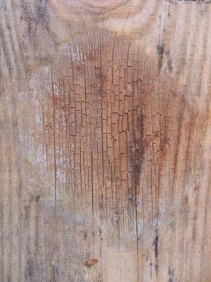 La mérule est un champignon qui attaque le bois