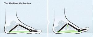Le mécanisme de treuil  (crédit image : Asics)
