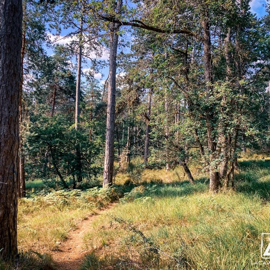 Où courir en forêt de Fontainebleau ? 57