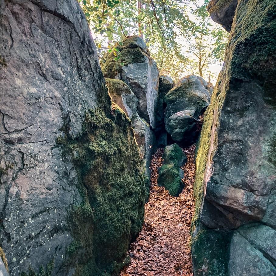 Où courir en forêt de Fontainebleau ? 58