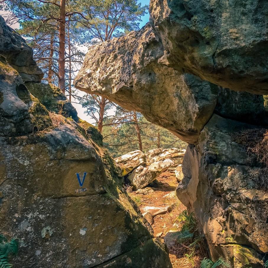 Où courir en forêt de Fontainebleau ? 53