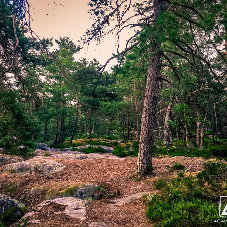 Où courir en forêt de Fontainebleau ? 32