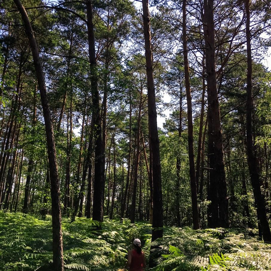 Où courir en forêt de Fontainebleau ? 63