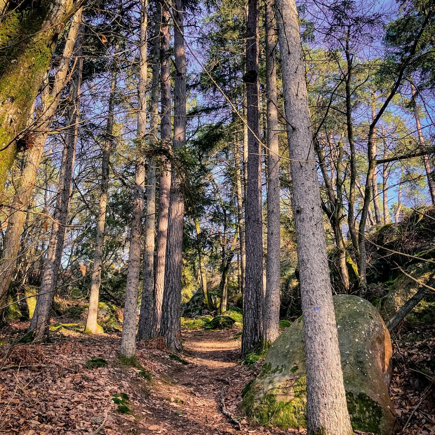 Où courir en forêt de Fontainebleau ? 76