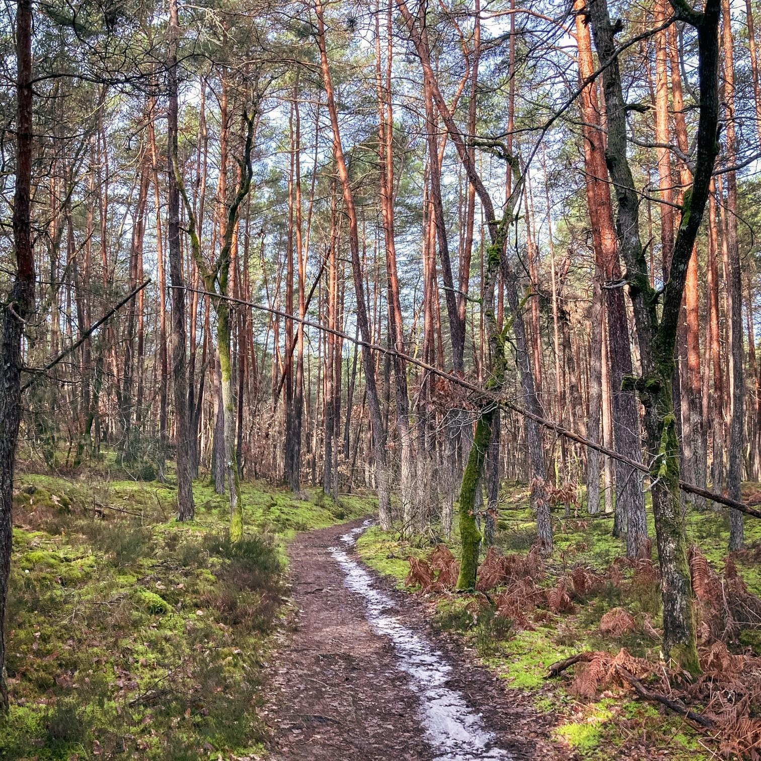 Où courir en forêt de Fontainebleau ? 81